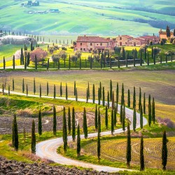 Photo mural beautiful views of Tuscany Alley Trees 2 Colors