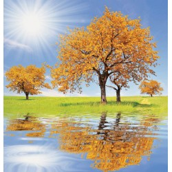 Wallpapers mural specular view of a beautiful tree