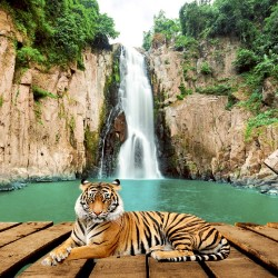 Wallpapers beautiful waterfall with a platform and a tiger