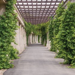 Wallpapers mural garden alley with greenery and columns