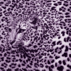Wallpapers mural leopard texture in purple and black