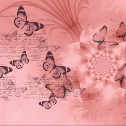 Wallpapers art butterflies with flower in 3 colors