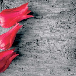 wallpapers red tulips on gray tree