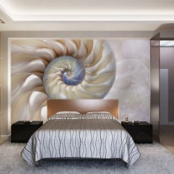 Photo mural beautiful sea shell