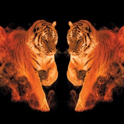 Wallpapers mural a tiger couple with flames in 2 colors