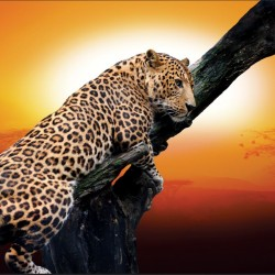 Wall murals leopard on a tree model 3