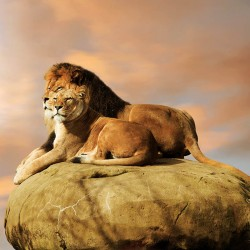 Photo mural pair of lions on a rock