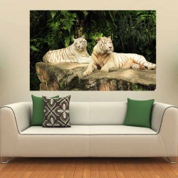 Photo mural a pair of white tigers