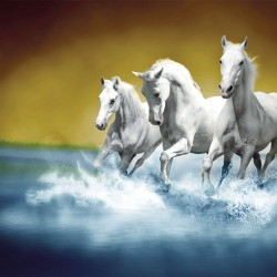 Wall murals three white horses in gallop in water