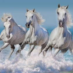 Wall murals three white horses in a gallop of ocean waves