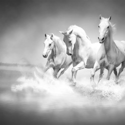 Wall mural Trio gray horses galloping in water