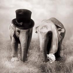 Wall mural Elephants couple as newlyweds