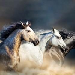 Photo mural profile of trio of multicolored horses