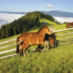 Photo mural horse and mare of green mountain slopes