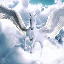Wall mural fantastic white horse with pegasus wings in 2 variants