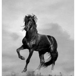 Wallpapers mural black horse on grey background