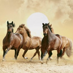 Wall mural brown horses on sunset background in 2 colors