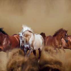 Wall mural beautiful horses in gallop in 2 colors