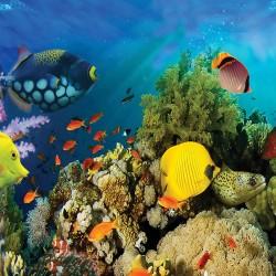 Wall mural water bottom fish