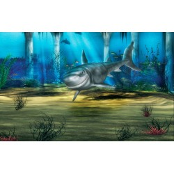 Photo mural shark in the sea bottom