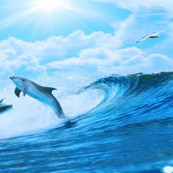 Photo mural two dolphins in sea waves