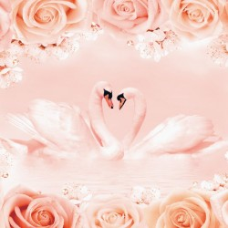 Photo mural-fototapete swan couple in roses frame