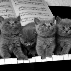 Wall murals kittens on black piano