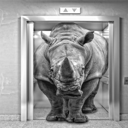 Wall murals 3d effect rhino in elevator